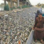 مرگ ده ها هزار ماهی در دجله و فرات