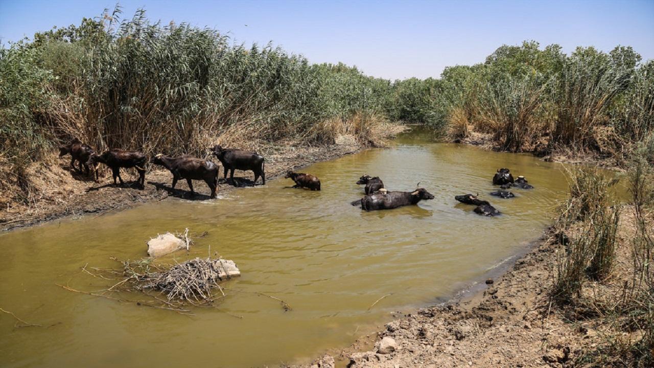 تامین حقابه تالاب هورالعظیم راهی برای جلوگیری از تنش آبی